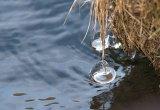 detail langs de waterkant