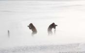 Stoere fotografen trotseren de sneeuwstorm