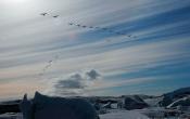 Zwanen vliegen over bij Jökulsárlón