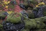 Herfskleuren bij thingvellir
